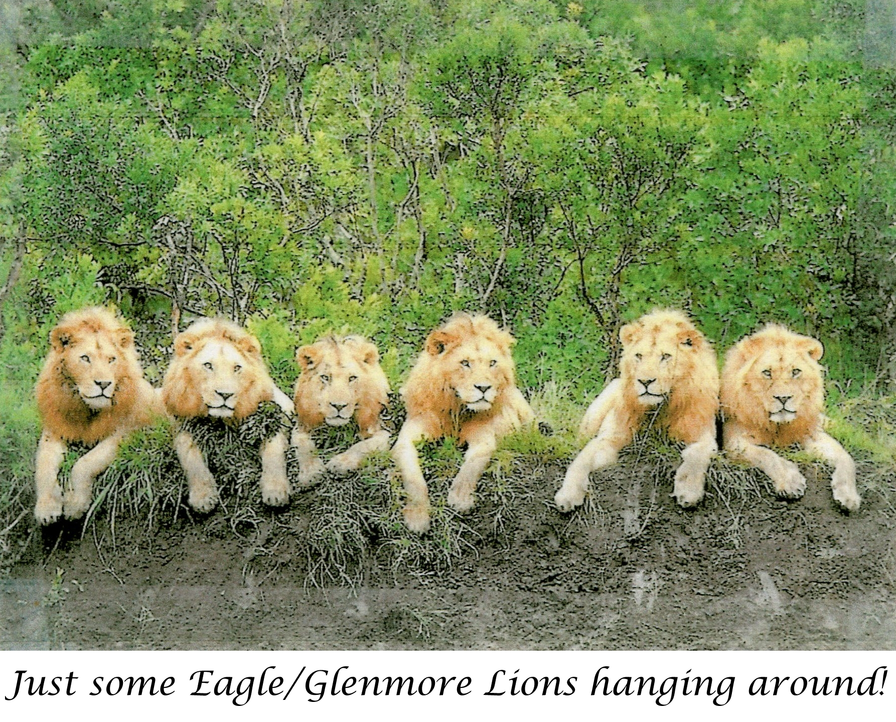 Just some Eagle/Glenmore Lions hanging around!